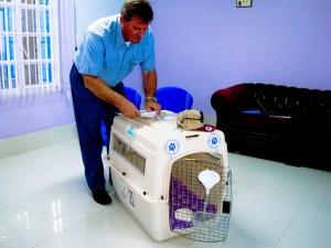 Delmon_Pets_Relocators_Bahrain_Horz (16)