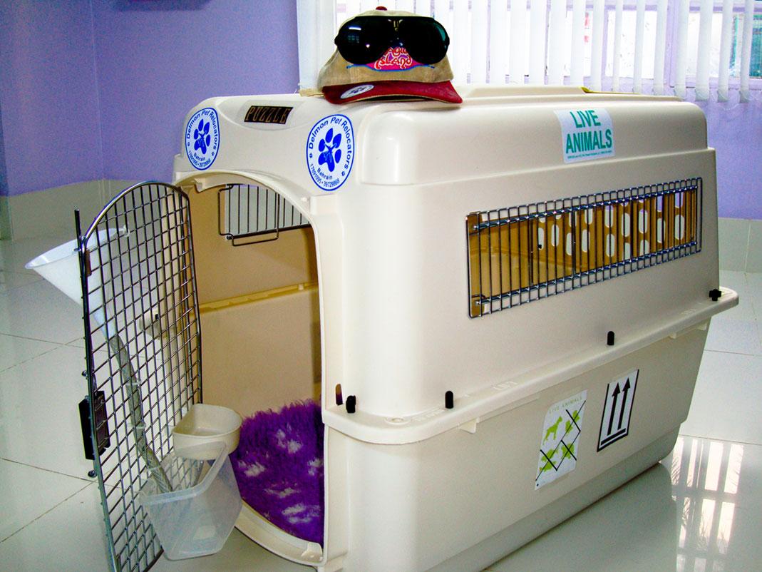 Delmon_Pets_Relocators_Bahrain_Horzn (10)