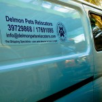 Delmon_Pets_Relocators_Bahrain_Horzn (5)