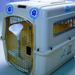 Delmon_Pets_Relocators_Bahrain_Horzn (7)