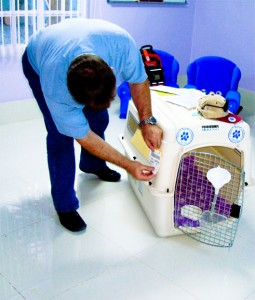 Delmon_Pets_Relocators_Bahrain_Ver (2)